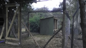 chicken-coop-shelter-finished