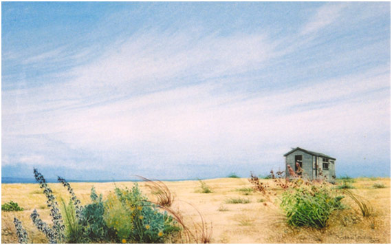 shed-dungeness