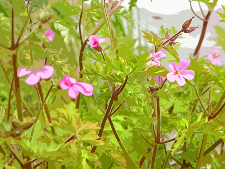 geranium-robertianum print
