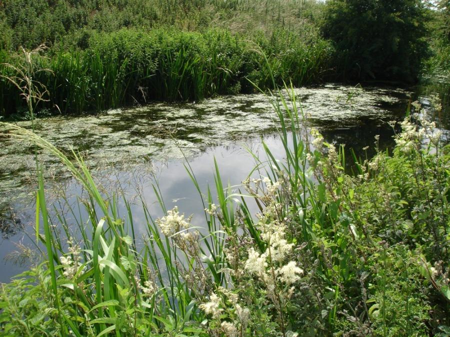 meadowsweet-two1