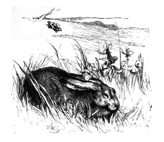 Tortoise and the Hare_Townsend