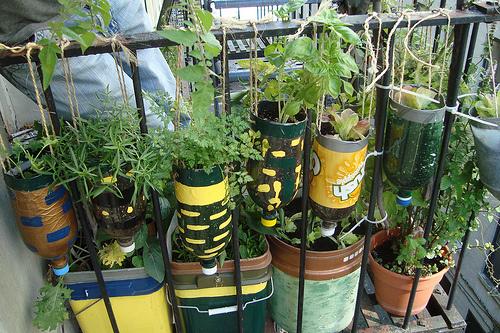 hanging-garden2