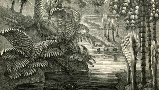 karboon-meijers