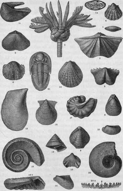 Plate-XII-Upper-Carboniferous-and-Permian-Fossils